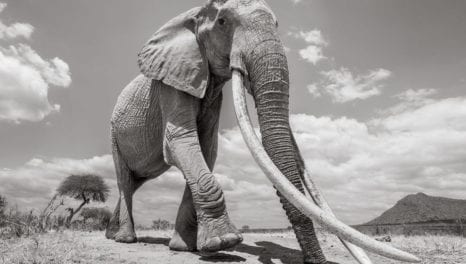 DANCING WITH ELEPHANTS – What I learned from working with Utilities.