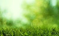 Grass-the next biofuel home heating market?