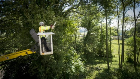 Northern Powergrid invests £9m in tree clearance