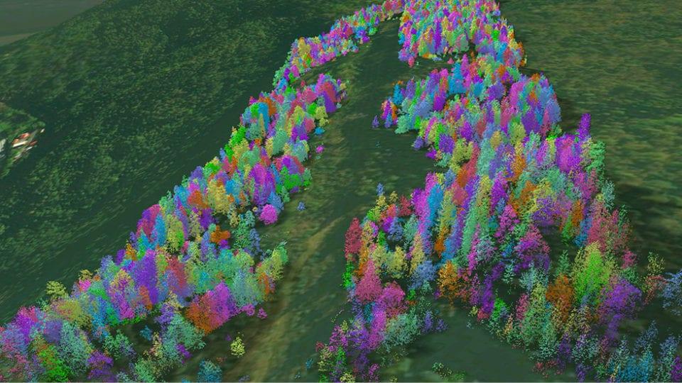Using big data to reduce vegetation risk